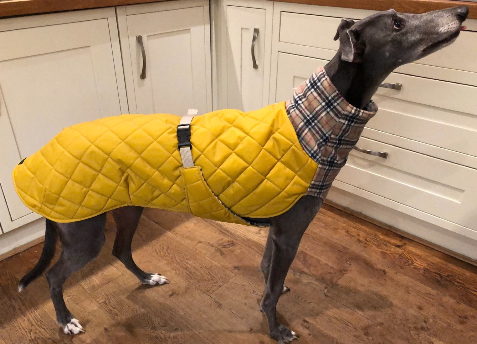 Padded Waterproof Coat
